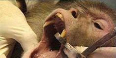 Libérez les animaux des laboratoires marseillais ! Free Marseille laboratory animals!
