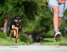wanna run faster? get a fierce dog to chase after you!