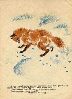 Animalarium: foxes