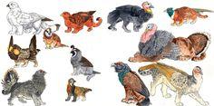Gryphon Paintings V: Wild Fowl by redvarg.deviantart.com on @deviantART