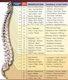 Are you nervous about the Nervous System? This may help!