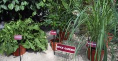 The Tropical Greenhouse at Walt Disneyland's Epcot Center in Orlando Florida features a spice garden.  Photo: Britt Conley