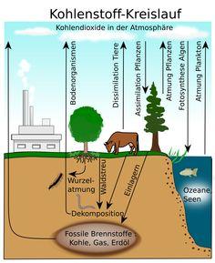 Kohlenstoffkreislauf und Stockstoffkreislauf