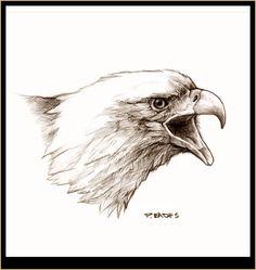 Peter Eades Original Wildlife Images - Bald eagle