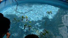 Probando los submarinos en la piscina