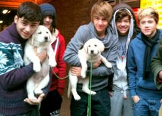 two cutest things in the word. puppies + one direction = adorable