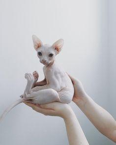 baby cat :D