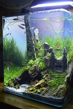Best Aquascaping Design Ideas to Decor Your Aquarium - Stunning aquascaping ideas for small tanks, aquascaping live rock ideas Aquascaping, Aquarium Aquascape, Nature Aquarium, Aquarium Fish Tank, Planted Aquarium, Fish Tanks, Mini Aquarium, Aquarium Ornaments, Aquarium Decorations