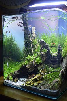 Best Aquascaping Design Ideas to Decor Your Aquarium - Stunning aquascaping ideas for small tanks, aquascaping live rock ideas Aquascaping, Aquarium Aquascape, Nature Aquarium, Aquarium Fish Tank, Planted Aquarium, Fish Tanks, Mini Aquarium, Aquarium Design, Aquarium Ornaments