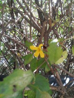 11월중순의 개나리꽃