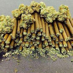 Medical Marijuana Quality Matters- Repined-5280mosli.com -Organic Cannabis College- Top Shelf Marijuana- |#OrganicCannabis