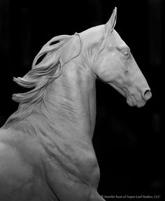 Horse Sculpture, Abstract Sculpture, Horse Head, Horse Art, Horse Anatomy, Draw On Photos, Clydesdale, White Horses, Equine Art