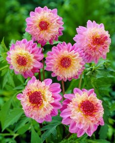 Dreamy Nature: Flowers