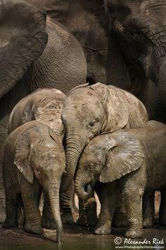 Elephant Kindergarten by Alexander Riek on 500px