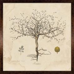 The Wishing Tree - This whimsical collection is comprised of 2 Natural Curiosities classics - The Wishing Tree and the Primativo Fortune Tree. These images date back to mid-late 18th century and were taken from explorers' journals and early garden sketches. Art: 48in. × 48in. Framed: 51.25in. × 51.25in.