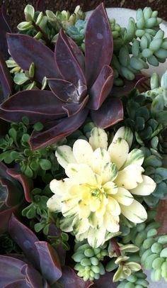 A new species variegated succulent. Like the mix.