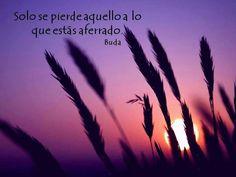 BUDA #frase #sabiduria