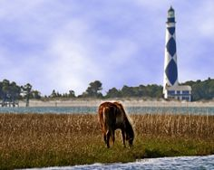 Out & About in Carteret County: Harker's Island, Cape Lookout and ...