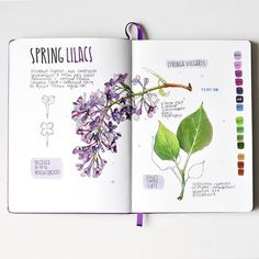 Anna Rastorgueva @anna.rastorgueva Lilacs #copic ...Instagram photo | Websta (Webstagram)