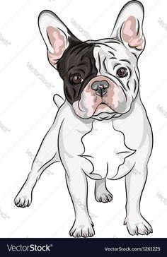 Vector Art : vector sketch domestic dog French Bulldog breed closeup portrait of the domestic dog French Bulldog breed on the& Source by homonoster The post closeup portrait of the domestic dog French Bulldog breed on the& appeared first on Welch Puppies. French Bulldog Wallpaper, French Bulldog Drawing, French Bulldog Names, Brindle French Bulldog, French Bulldogs, Tattoo Bulldog, French Bulldog Tattoo, Bulldog Breeds, Bulldog Puppies