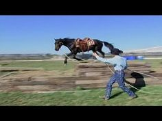 Horse Training mit Vertrauen und Respekt in Harmony
