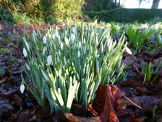 February 2016 in the Show Gardens | Walkers Nurseries