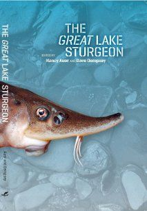 This collected volume captures many aspects of the remarkable Great Lakes sturgeon, from the mythical to the critically real. Lake sturgeon is sacred to some, impressive to many and endangered in the Great Lakes, Lake Sturgeon, Sturgeon Fish, Great Lakes Region, Koi Carp, Michigan State University, Wildlife Conservation, Animal Kingdom, Toscana, Ancestry