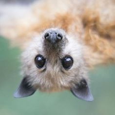 BaT! Too cute.