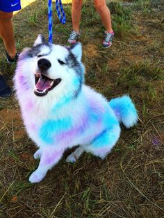 awww puppy in the color run