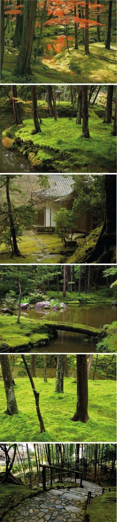 Moss gardens are all so beautiful. Bring beauty to the gloomy forest.