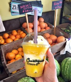Countryside Citrus - Vero Beach, FL | love their orange slushie with vanilla soft serve!