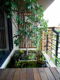 Balcony mini pond                                                       …