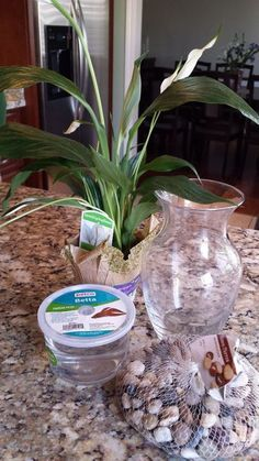 This is a great gift idea that costs only $8! Thats right! Everyone who has seen my vase has wanted one and they are super simple to make! You will need:- *1* Betta...