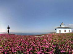 Alojamientos para enamorarse de Galicia - Hoteles Lighthouse, Wild Flowers, Tourism, Tower, Sky, Mountains, Landscape, Nature, Plants