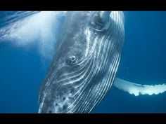 Ocean of Giants || Sri Lanka WIld Life || National Geographic Wild 2015 ...