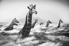 Hakuna Matata ou la vraie vie des animaux. © Thomas Subtil - Tous droits réservés