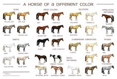 Here's a really nice horse color chart by SarahSlater. Description from thewargameswebsite.com. I searched for this on bing.com/images