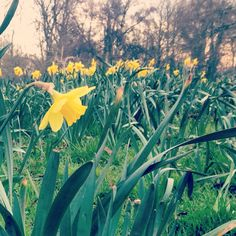 Beddington park spring