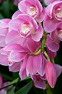Orchid - By Andy