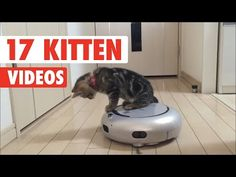 17 Cute Kitten Videos Compilation 2017 - http://funnypetvideos.net/17-cute-kitten-videos-compilation-2017/