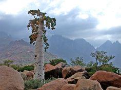 Socotra: l'isola delle piante bizzarre