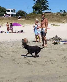 Skilled Dog