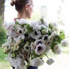 Floret Anemone Black And White via Floret Flowers Flower Farm, Easy To Grow Bulbs, White Flowers, Anemone, Floral, White Anemone, Planting Flowers, Spring Flowers, White Gardens