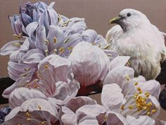 The gentle messenger: Pied Imperial Pigeon by artist Anne Middleton