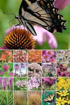 96 Plant Butterfly Garden (Well-Drained Soil in Full Sun)