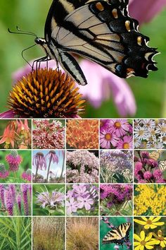 96 Plant Butterfly Garden : Prairie Nursery Native Plants, Buy Native Plants | Native Seeds | No Mow Lawn | Native Landscape Consulting