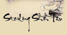 Sterling Shih Tzu | Your calligraphy name