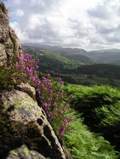 Lake District, UK. It really is like hiking in a postcard. Only with really great beer...