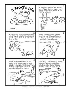 Science Booklet: life cycle of a frog: