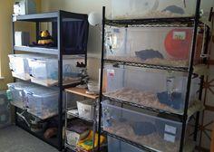 Hedgehog breeding room